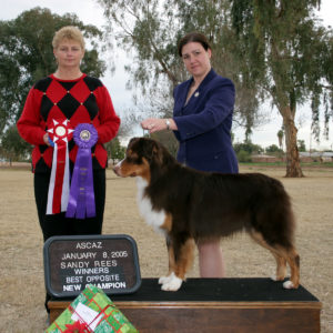 Flyer going Winners Dog and Best Opposite Sex to finish his ASCA championship at ASCAZ under ASCA Breeder Judge Sandy Rees 01.08.05