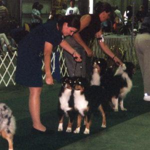 Phoebe and Clover competing in the Brace class at the ASCA National Specialty in Colorado, September 2001.