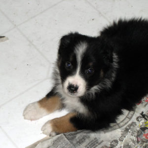 Uma at 5 weeks of age