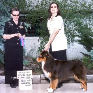 Flyer going Winners Dog and Best of Winners at Flagstaff KC, June, 2005