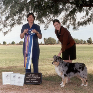 Jazz winning Altered Winners Dog, Altered Best of Winners and and Altered Best of Breed under Senior Breeder Judge Annette Cyboron at the ASCAZ Silver Specialty, 11.24.2001