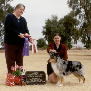 Jazz winning Altered Winners Dog and Altered Best Opposite Sex under Judge Carol Kriesel at ASCAZ 02.02.2002