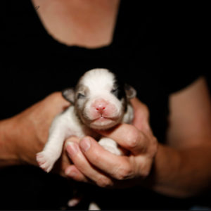 Rowdei as a newborn. Photo by Heidi Erland