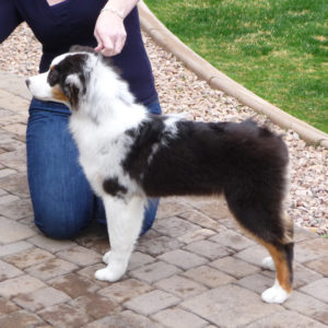 Rowdei at 4 months of age