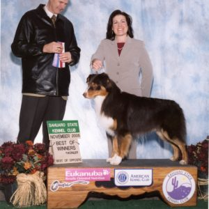 Flyer finishing his AKC championship at Sahuaro State KC, November 2005