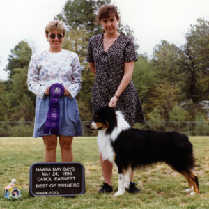 Symon winning Winners Dog and Best of Winners at NAASA May Days under ASCA Senior Breeder Judge Carol Earnest, May 24, 1996. Photo Credit Kristin Rush