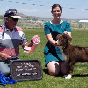 Flyer winning BOSP at NAASA under ASCA Breeder Judge Gary Hawley 05.24.2003