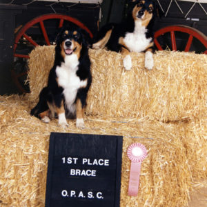 Phoebe and her aunt Scooter (BISS CH. Chrisdava's T-N-T of Shadowrun, CD, STDdsc, DNA-CP) Winning Brace at the OPASC National Specialty Pre-Show, November 1994. Handled by Kristin Rush