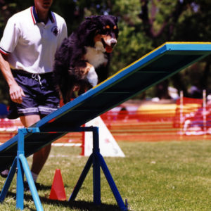 Phoebe doing the Teeter at Mile High Agility in Prescott AZ, May 13, 2000