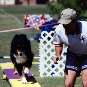 Phoebe doing the Teeter in Agility