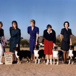 Phoebe winning the Brood Bitch class under Judge Judy Wilson at the ASCAZ Silver Specialty in Phoenix, AZ, November1997. Shown with her progeny, Tuff, Zoe and Cody.