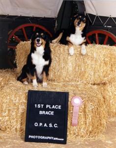 199411 Phoebe Scooter 1st Place Brace OPASC Preshow