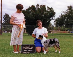 Zoe winning Best of Breed Puppy under Judge Sandy Wheat at ASCAZ, September 1, 1997.