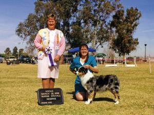 Zoe winning Reserve Winners Bitch under ASCA Sr. Breeder Judge Marge Stovall at ASCAZ, March 20, 1999.