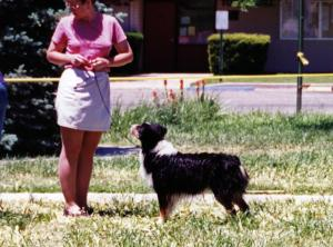 Cody showing in the NAASA Wet Dog Contest April 27, 1999