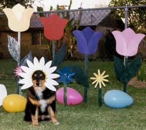 Daisy,  Easter 1999