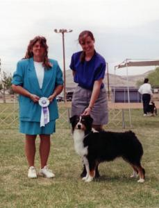 Cody going Reserve Winners Dog to a 4 pt. major at Zia ASC under ASCA Senior Breeder Judge Becky DeLeon, April 30, 2000.