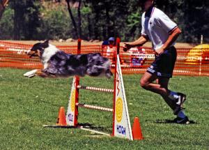 Zoe doing a bar jump at Mile High Agility, Prescott, AZ May 2000