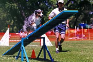 Zoe and Scott doing the Teeter obstacle, at Mile High Agility in Prescott, AZ, May 2000