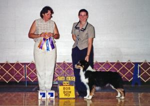 Cody going Winners Dog, Best of Winners, and Best of Breed at Zia ASC, under ASCA Senior Breeder Judge Annette Cyboron, August 4, 2000.