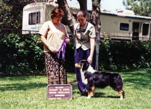 Cody going Winners Dog at NAASA under ASCA Senior Breeder Judge Denise Creelman August 12, 2000.