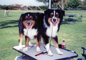 Cody and Clover fighting over who's going to be next on the grooming table at OPASC, 16 Sept 2000