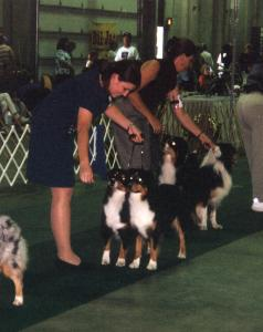Phoebe and Clover competing in the Brace class at the 2001 ASCA National Specialty in Greeley, CO