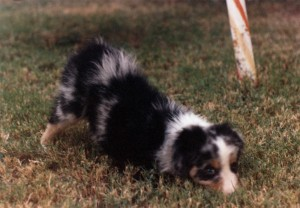 Abbi at 8 weeks of age