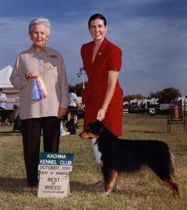Clover winning Winners Bitch, Best of Winners, and Best of Breed at Kachina KC, Goodyear, AZ October 2001