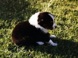 Cody at about 4 weeks of age