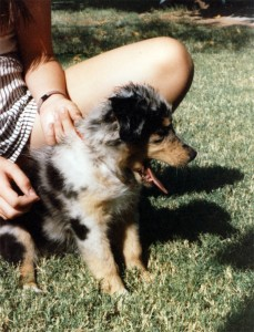 Harley as a puppy in 1987