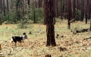 Harley messing around out in the Forest outside Flagstaff, AZ, Aug 1988