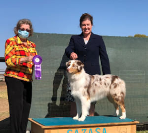 14 Nov 2020 - Reserve Winners Dog under AKC Judge Diane Langstrom, at SAZASA, Litchfield Park, AZ