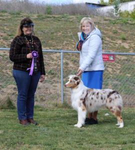 13 Mar 2021 - Winners Dog for a 3 pt major under ASCA Senior Breeder Judge Tina Burks at ASC of SDC, El Cajon, CA