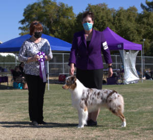09 Jan 2021 – Reserve Winners Dog under ASCA Senior Breeder Judge Sherrie Scott at ASCAZ, Waddell, AZ