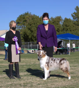 09 Jan 2021 – Reserve Winners Dog under ASCA Provisional Breeder Judge Katelyn Scott Peart at ASCAZ, Waddell, AZ