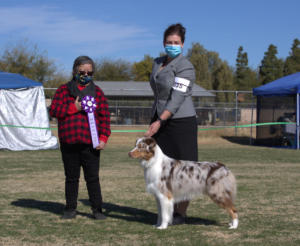 10 Jan 2021 – Reserve Winners Dog under ASCA Senior Breeder Judge Lynn Hamon at ASCAZ, Waddell, AZ