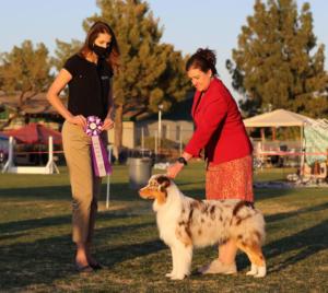 27 Feb 2021 – Reserve Winners Dog under ASCA Senior Breeder Judge Brandy Greenhagen at ASCAZ, Waddell, AZ