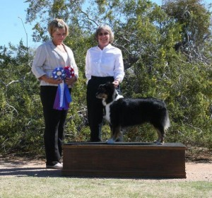 Lola winning Altered  Winners Bitch, Altered Best of Winners and Altered Best Opposite Sex under ASCA Senior Breeder Judge Erica Peterson