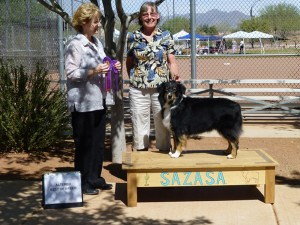 Lola winning Altered  Winners Bitch, Altered Best of Winners and Altered Best of Breed under ASCA Breeder Judge Sharon Sparks at SAZASA, Tucson AZ