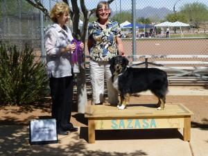 Lola winning Altered  Winners Bitch, Altered Best of Winners and Altered Best of Breed under ASCA Breeder Judge Sharon Sparks at SAZASA, Tucson AZ