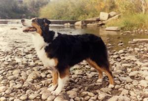 Meeka at the 1990 ASCA National in Loveland, CO, Sep 1990