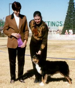Clover winning Winners Bitch for a 5 point major under Judge Virginia Borduin, at OPASC Marana AZ  16 Dec 2000