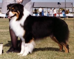 ASCA CH. Capricorn's Symon Sez, ASCA CD, STDs DNA-VP
