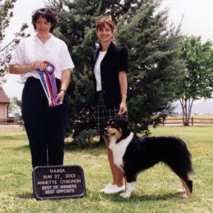 Aster winning Altered Winners Bitch, Altered Best of Winners, Altered Best Opposite Sex under ASCA Senior Breeder Judge Annette Cyboron, 05.27.2001