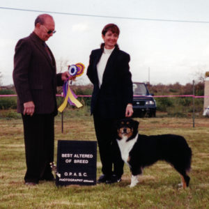 Aster winning Altered Winners Bitch, Altered Best of Winners, Altered Best of Breed under Judge Donald Lawicki at OPASC, 03.08.2001