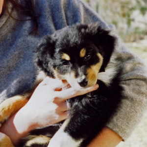 Aster at around 8 weeks of age. December 1998