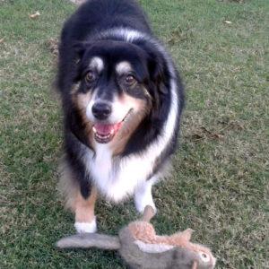 Aster still loves Mr. Squirrel!