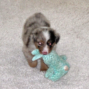 Jammie with the bunny at 4 weeks of age