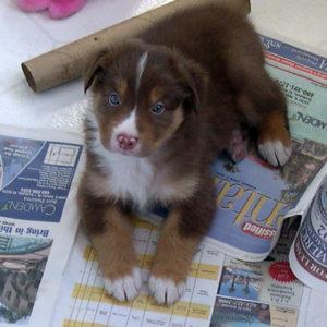Bear at 4 weeks of age